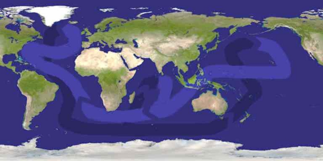 File:Thermohaline circulation.png