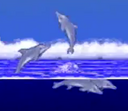 Dolphinkind