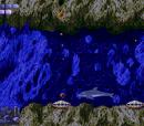 Toxic Clam