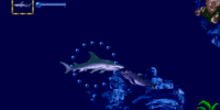 Shark Sea