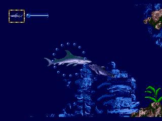 Shark sea 2