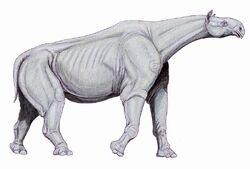 Paraceratherium2