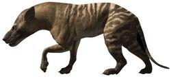 Hyaenodon2