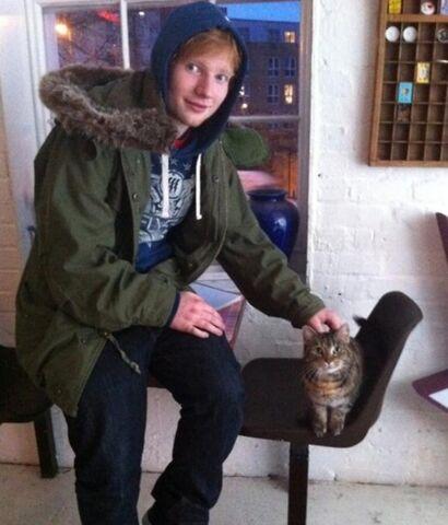 File:Ed-cat.jpg