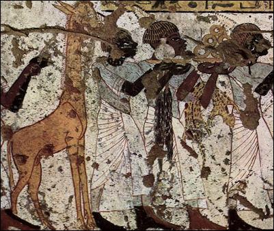 File:20120215-tarde if giraffe.jpg