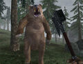 Grizzly Bear Screenshot.jpg