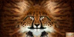 File:Khajiit texture 3.png