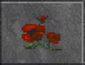 Red Poppy (Daggerfall).png