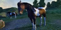 Wild Paint Horse
