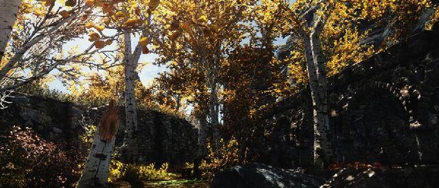 File:Riften Birch Trees.jpg