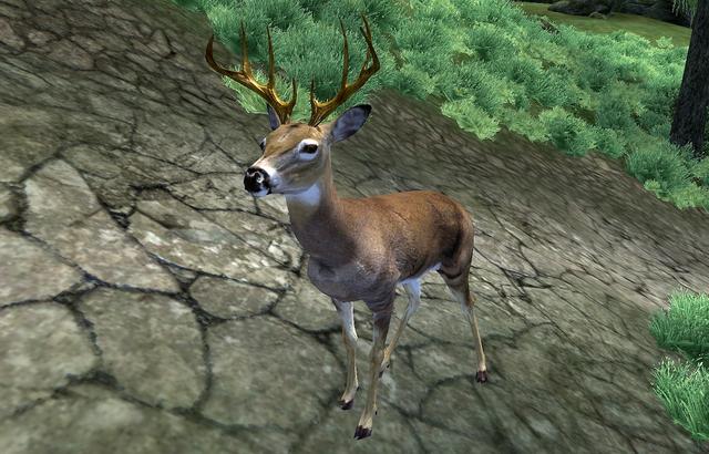 File:Deer (Oblivion).png