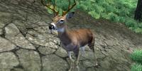 Deer (Oblivion)