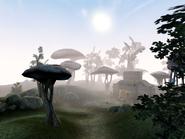 Elmas Island 1 Morrowind