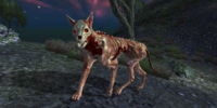Skinned Hound