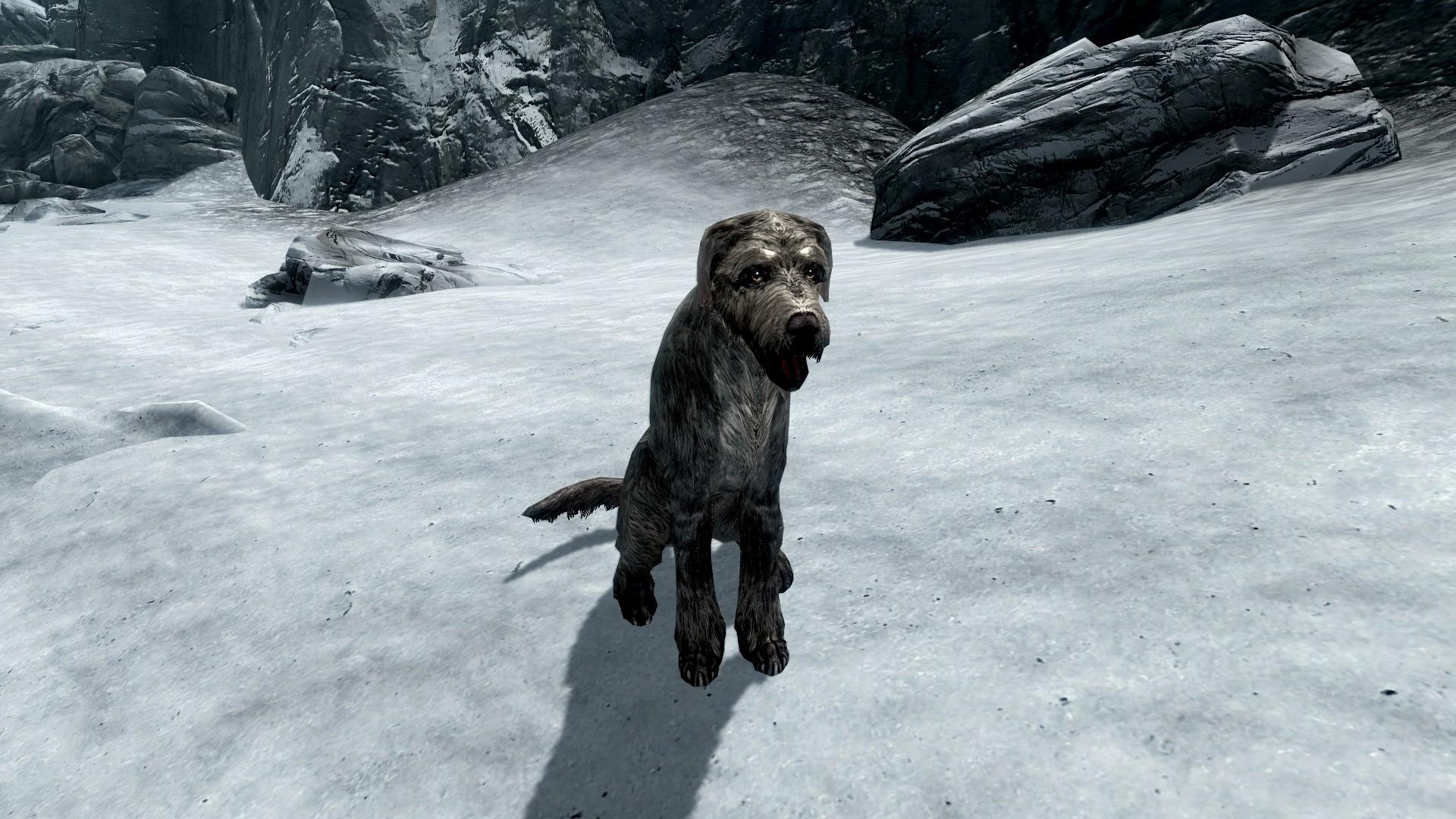 Stray Dog Elder Scrolls FANDOM Powered By Wikia - Stray animals in the us map