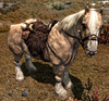 Frost Horse