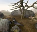 Ahemmusa Camp (Morrowind)