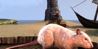 Rat (Online)