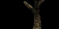 Corkbulb Root