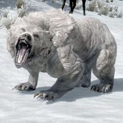 SnowBear.jpg