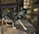 Dog (Oblivion)