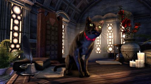 File:Black Cat.png