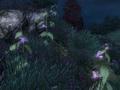 Nightshade (Oblivion).png