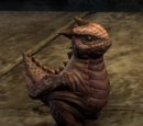 Bantam Guar (Pet)