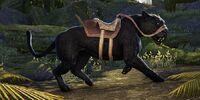 Black Senche-Panther