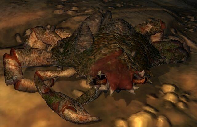 File:King mud crab.jpg