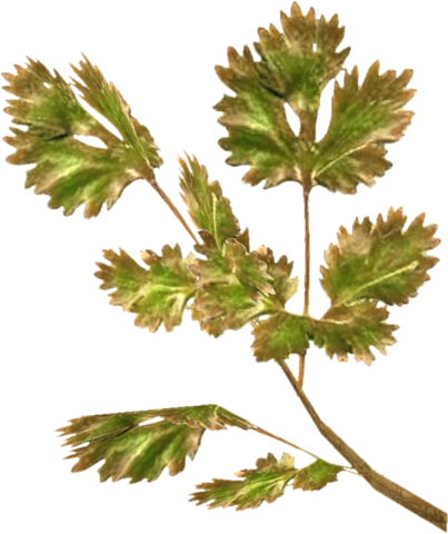 File:TESV Frost Mirriam.png