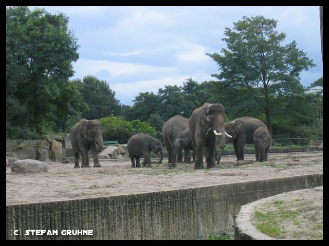 Datei:Tierpark Berlin5.jpg