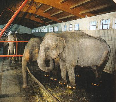 Datei:Elefantenstall.jpg