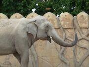 Elefantenbulle Naing Thein