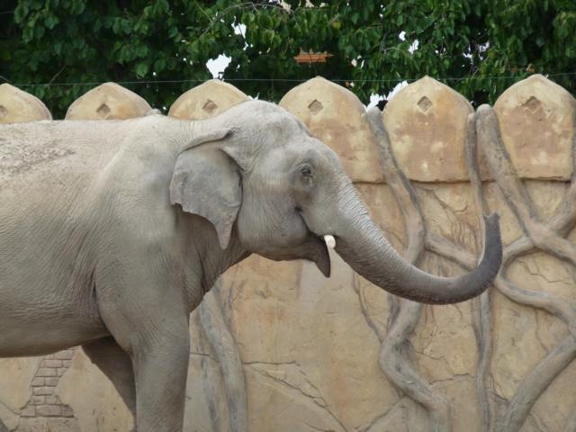 Datei:Elefantenbulle Naing Thein.jpg