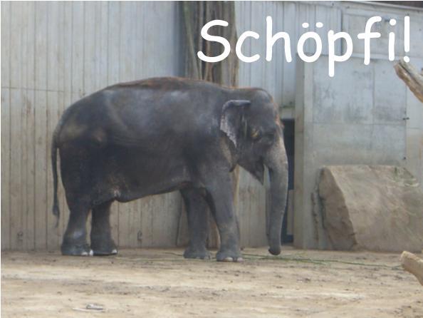 Datei:Raetsel-Schoepfi4.jpg