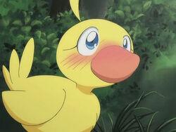 Ahi duck02