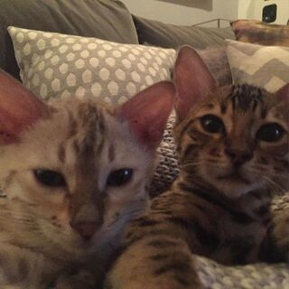 "Lennon- ""Night in with the homie #selfie"" Going to miss these boys 😥"