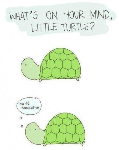 File:Little turtle.jpg