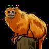 Golden Lion Monkey