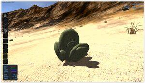 Opuntia Cactus Spears