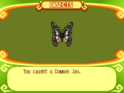 File:Common Jay.PNG