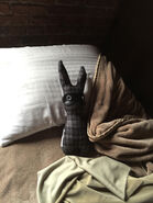Home-bunny