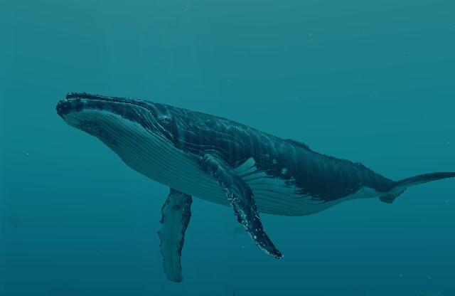 File:Humpback Whale 1.jpg