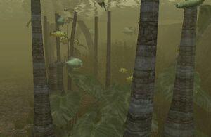 Cortica River Mangrove Maze 1