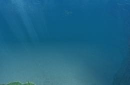 Ancestor Reef