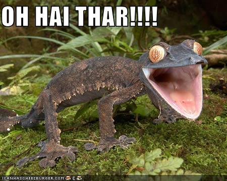 File:Oh hai thar chameleon.jpg