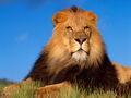 4 Lion.jpg