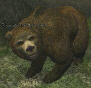 A grizzled shadowmaw kodiak