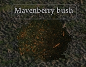 Mavenberry bush